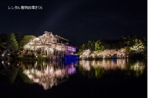 紅しだれコンサート(京都新聞社 提供)